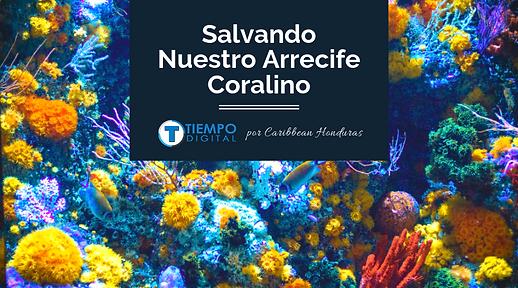 Salvando Nuestro Arrecife Coralino.png