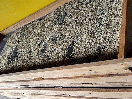 RUTA DEL CAFÉ   COFFEE ROUTE