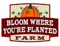 Logo for Bloom Where You're Planted Farm and Pumpkin Patch, Avoca, Nebraska