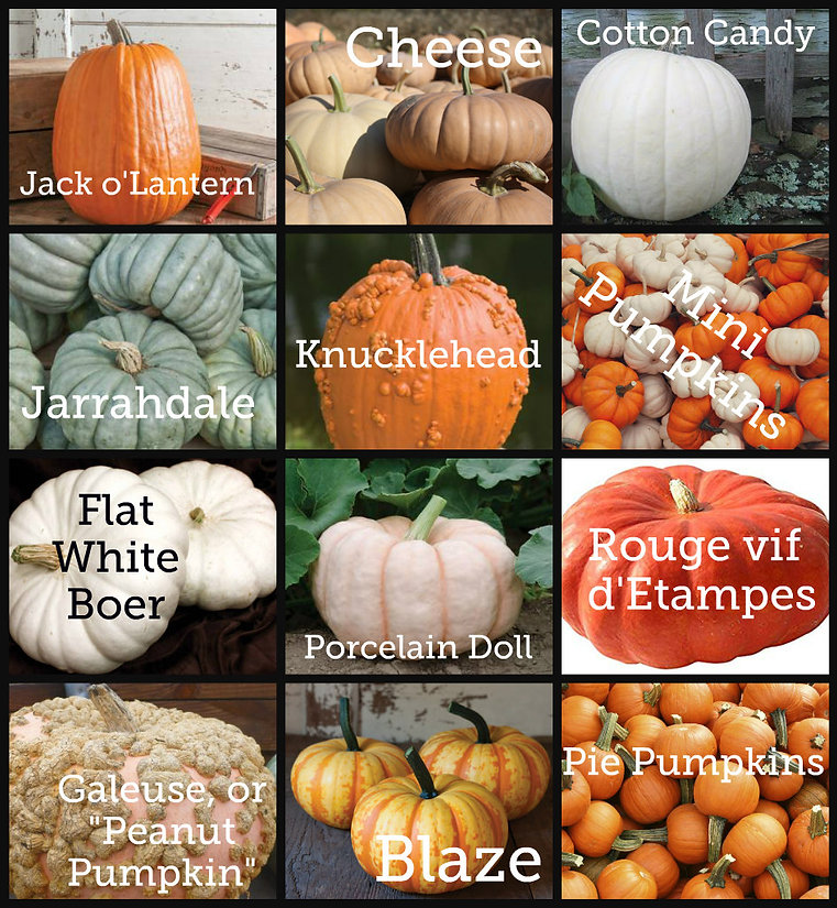 pumpkin varieties.jpg