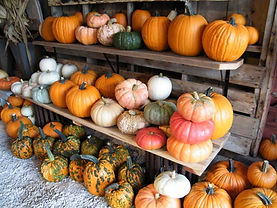 Heirloom pumpkins for sale at the Marketplace at Bloom Where You're Planted Farm and Pumpkin Patch, Avoca, NE
