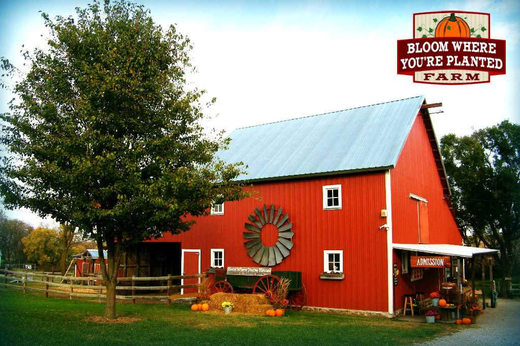 Bloom barn