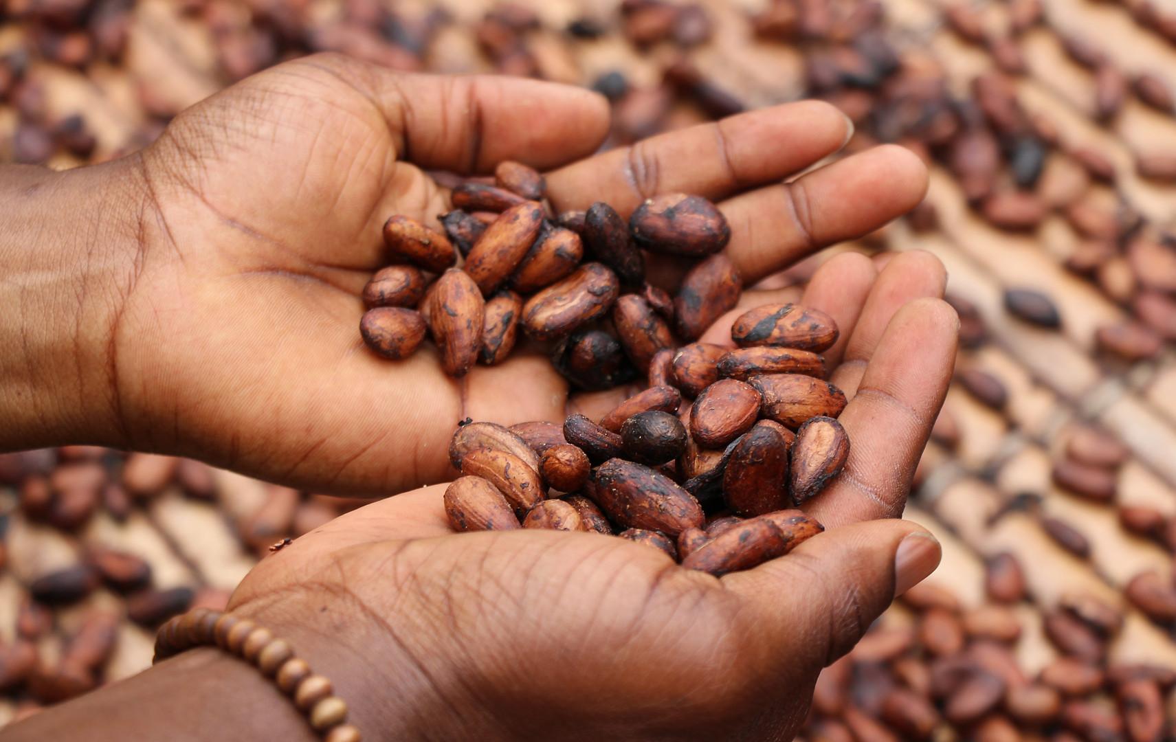 Ivory Coast: Cocoa Cooperative