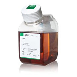 GIBCO Fetal Bovine Serum, certified, United States, 16000-044
