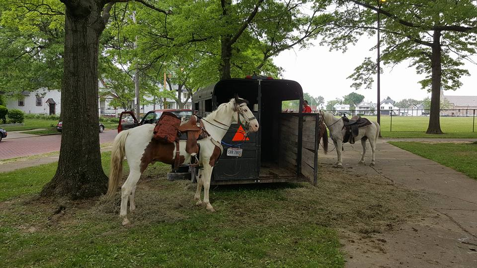 2nd Annual Festival - Horses