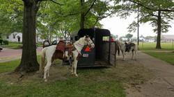 2nd Annual Festival - Horses