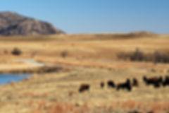 Oklahoma landscape bison