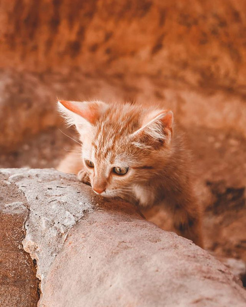When I was at Petra there were tiny kitt