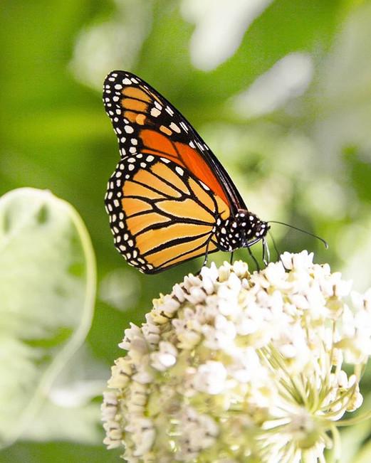Butterflies at #newportstatepark #doorco