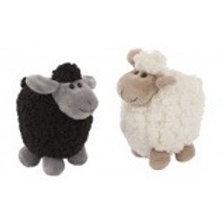 Soft woolly sheep