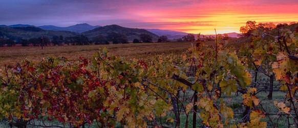 Kelham Vineyards Oakville Property At Sunset