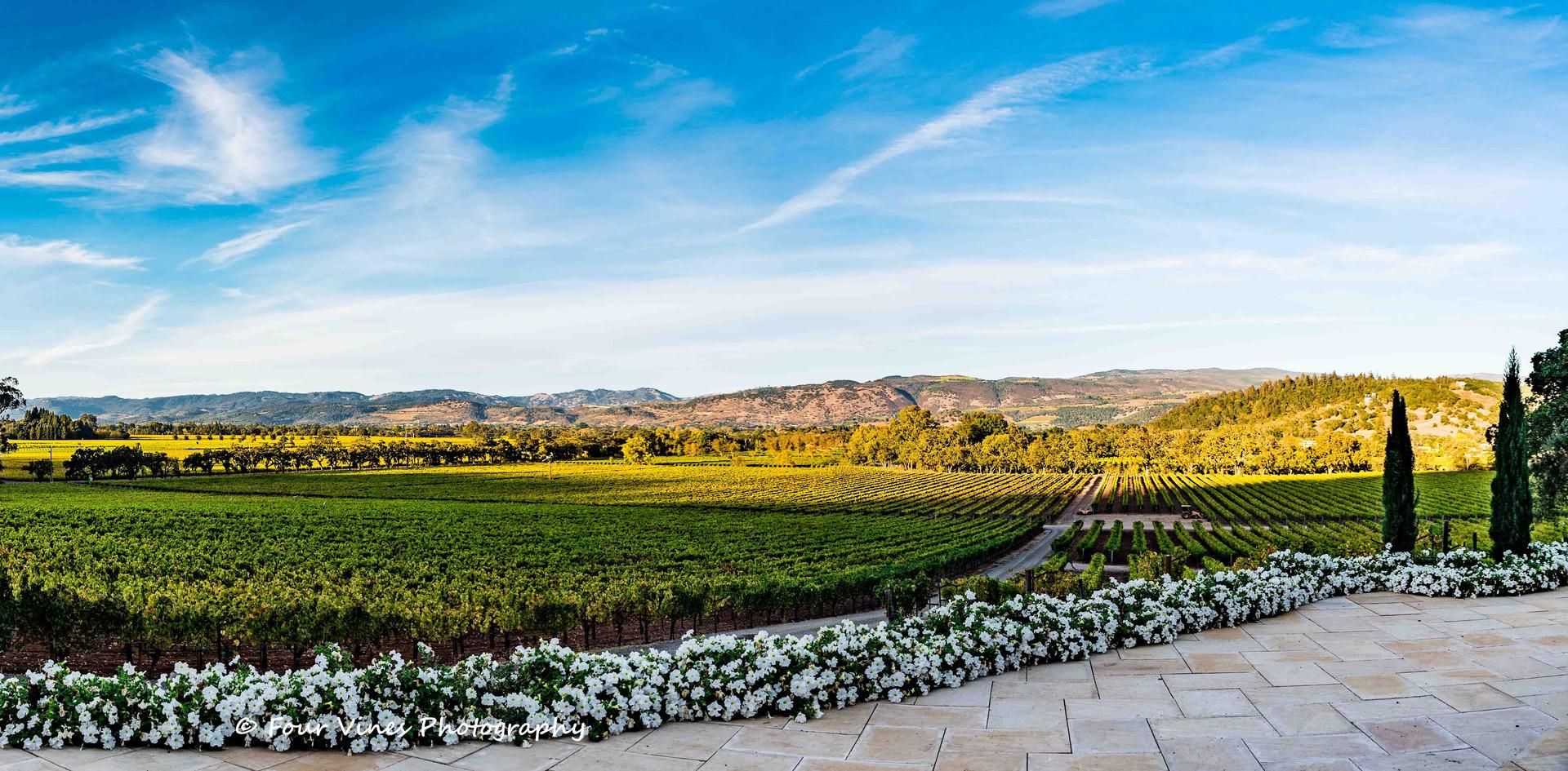 Panoramic View Kelham Vineyards