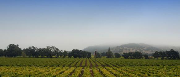 Fog Over The Hilltops