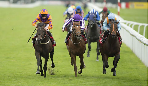 Harbour-Law-wins-the-2016-St-Leger-Stake