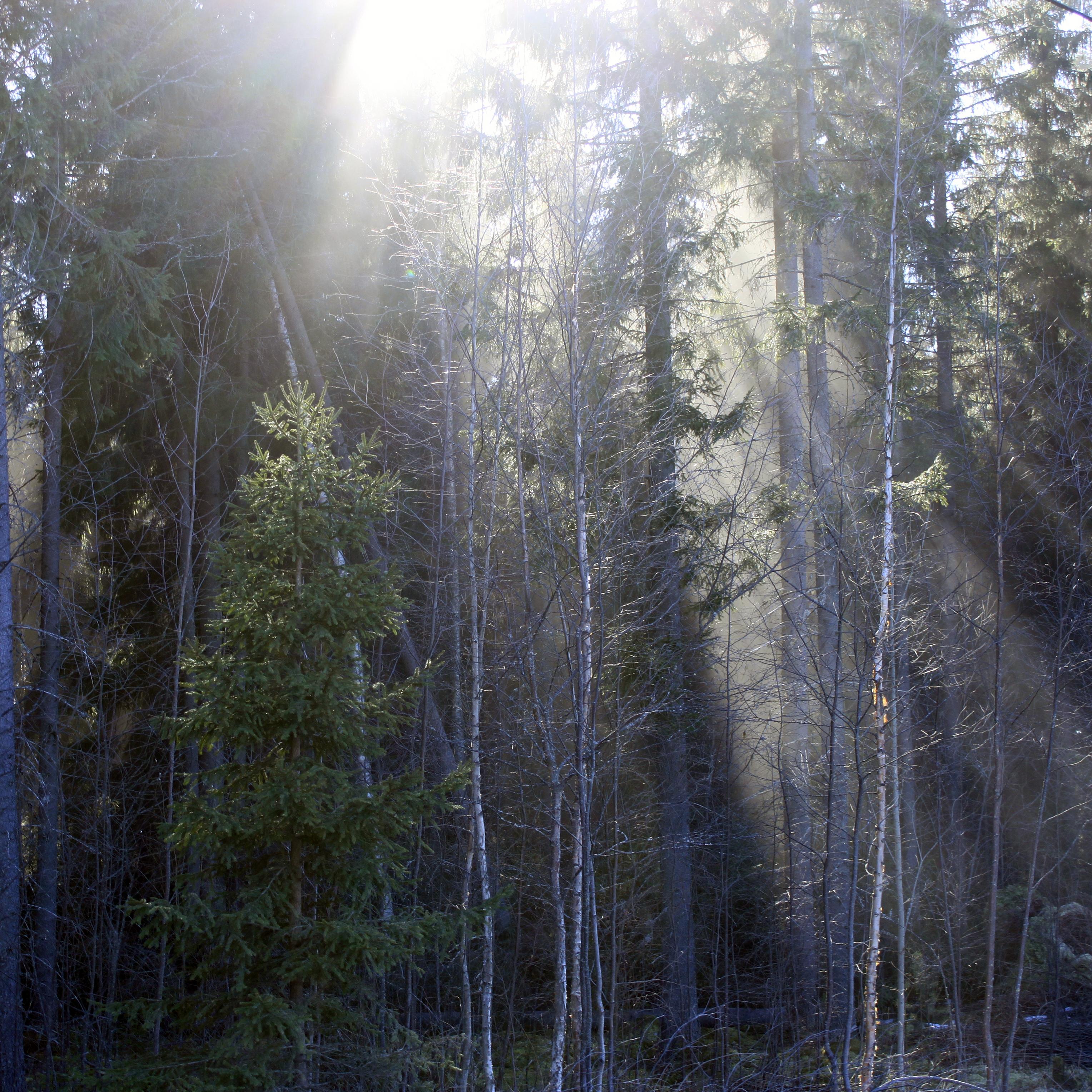 Valon pilkahduksia