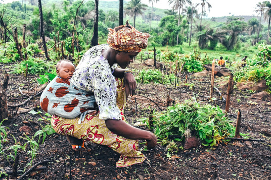 Africa's Organic And Sustainable Agricultural Export Industry And Farming Education.