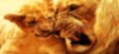 g2s lion cub.PNG