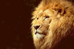 lion-wild-africa-african_edited.jpg