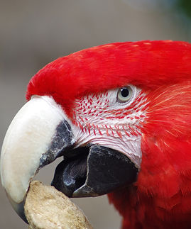 Oiseaux (7).jpg