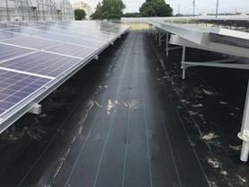 太陽光発電所への防草シートの効果ってどうなの?