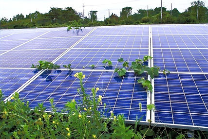太陽光発電-除草-草刈り-茨城.jpg
