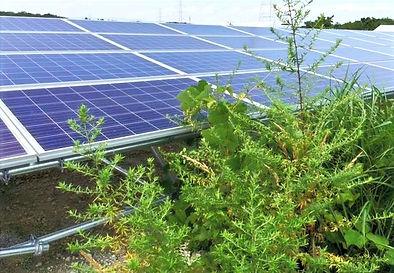 太陽光発電-除草-草刈り-静岡.jpg