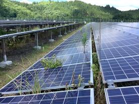 3月〜の春先に太陽光発電所の草刈りをオススメします。
