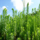 今回は太陽光発電所の草刈りをするための準備やり方・注意事項
