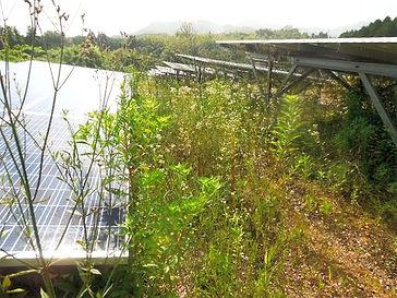 太陽光発電-除草-草刈り-山梨.jpg