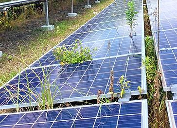 太陽光発電-除草-草刈り-神奈川.jpg