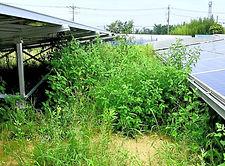 太陽光発電所草刈り低価格