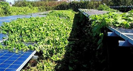太陽光発電-除草-草刈り-千葉.jpg