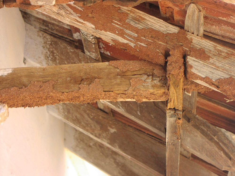 Soil termites attacking the timber rafters