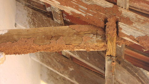 TERMITE ATTACK : CAUSES AND ITS PREVENTION