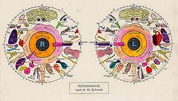 mappa iridologica - consulenza_iridologi