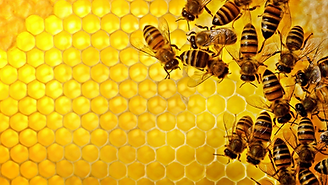 bees.tiff