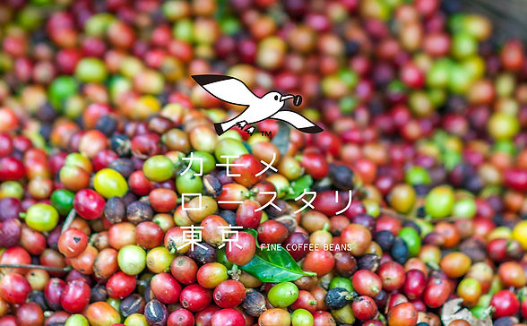 焙煎したての鮮度に拘ったコーヒー豆。