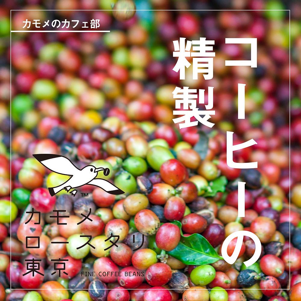 コーヒー豆の精製方法について