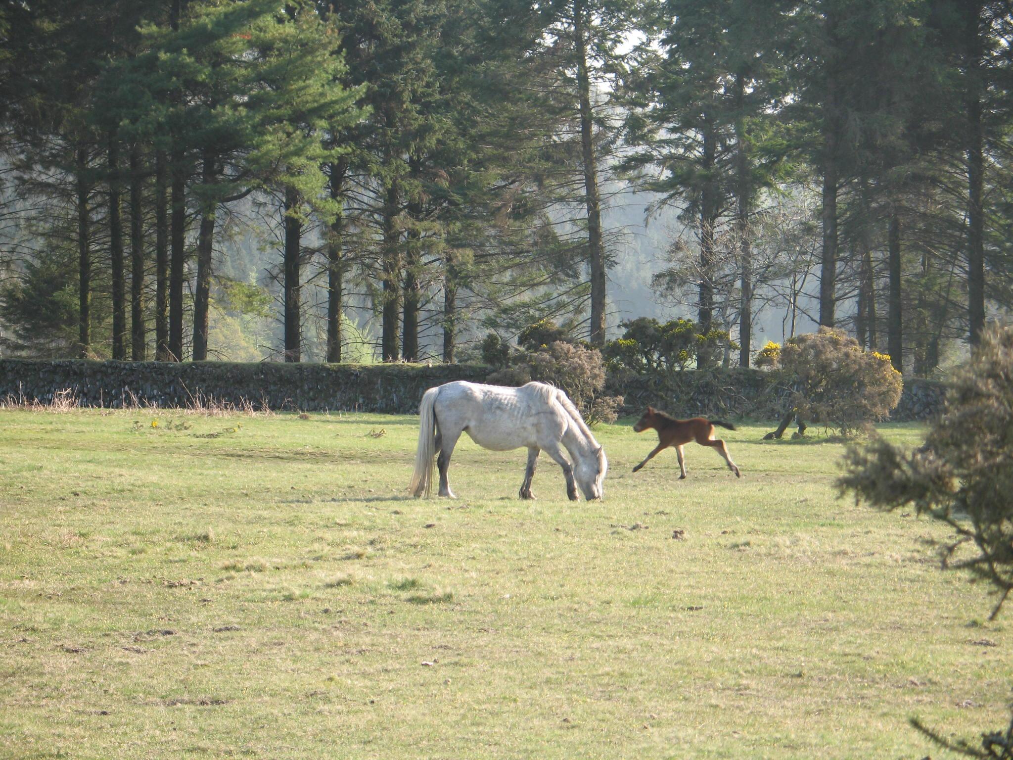 barnabas-house-ponies