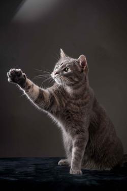 photographe-chiens-chats-animaux-portraits-studio-saint-malo-bretagne-176
