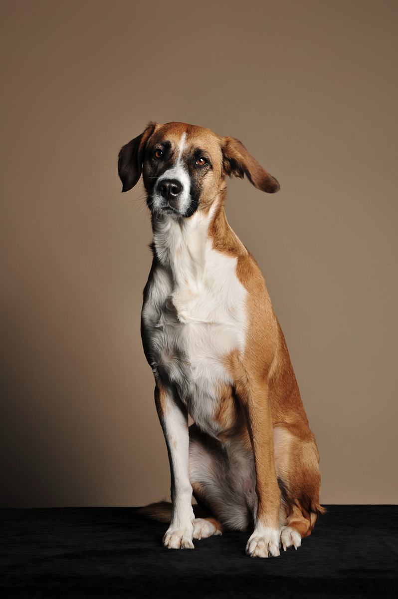 photographe-chiens-chats-animaux-portraits-studio-saint-malo-bretagne-200