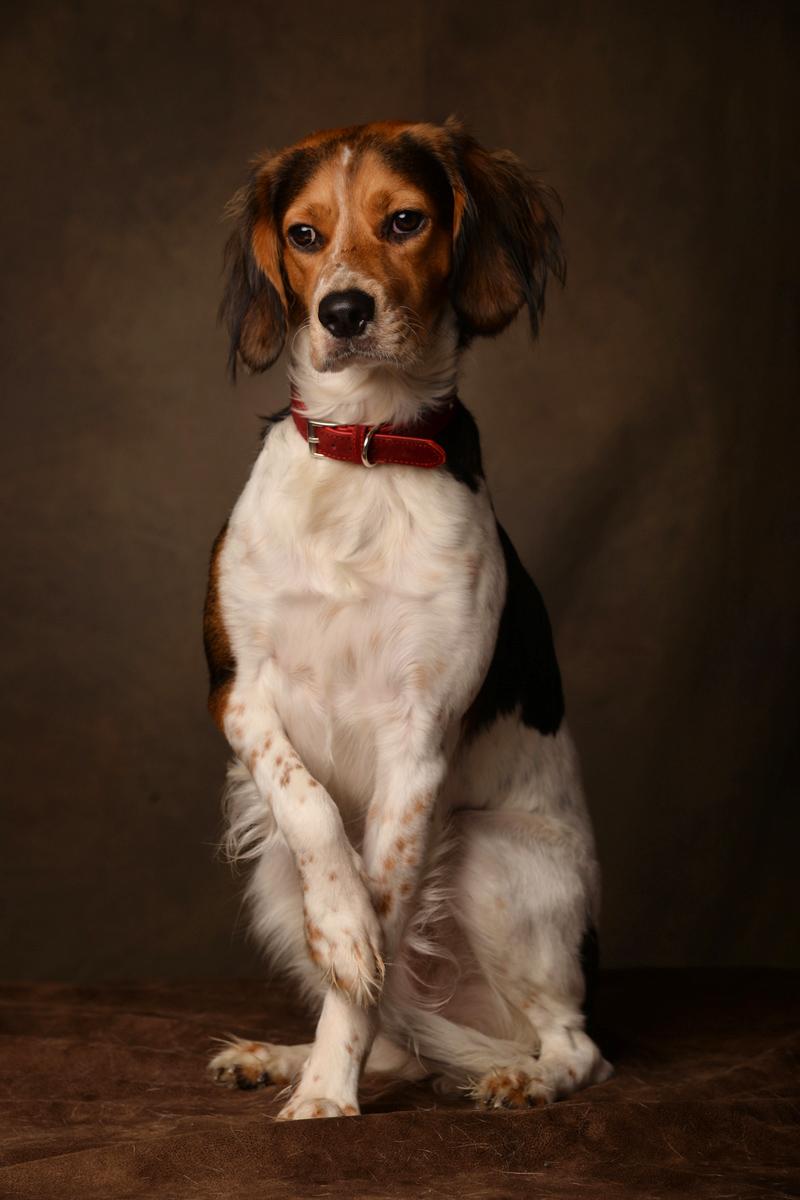 photographe-chiens-chats-animaux-portraits-studio-saint-malo-bretagne-180