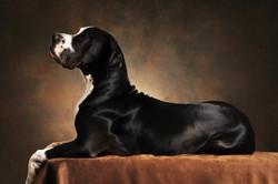 photographe-chiens-chats-animaux-portraits-studio-saint-malo-bretagne-189