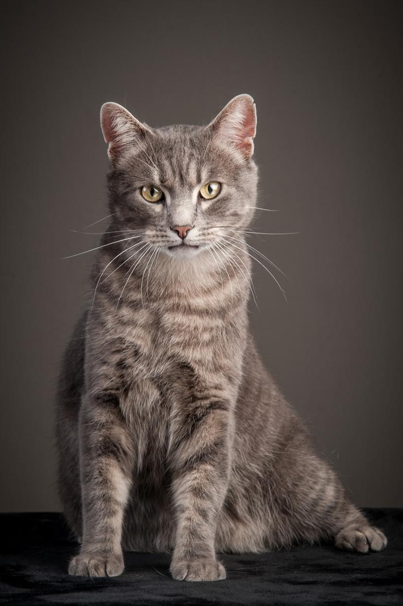 photographe-chiens-chats-animaux-portraits-studio-saint-malo-bretagne-193