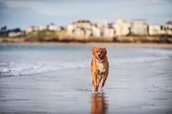 photographe-chiens-chats-animaux-portraits-exterieur-saint-malo-bretagne-204