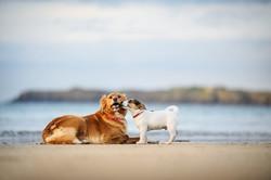 photographe-chiens-chats-animaux-portraits-exterieur-saint-malo-bretagne-215
