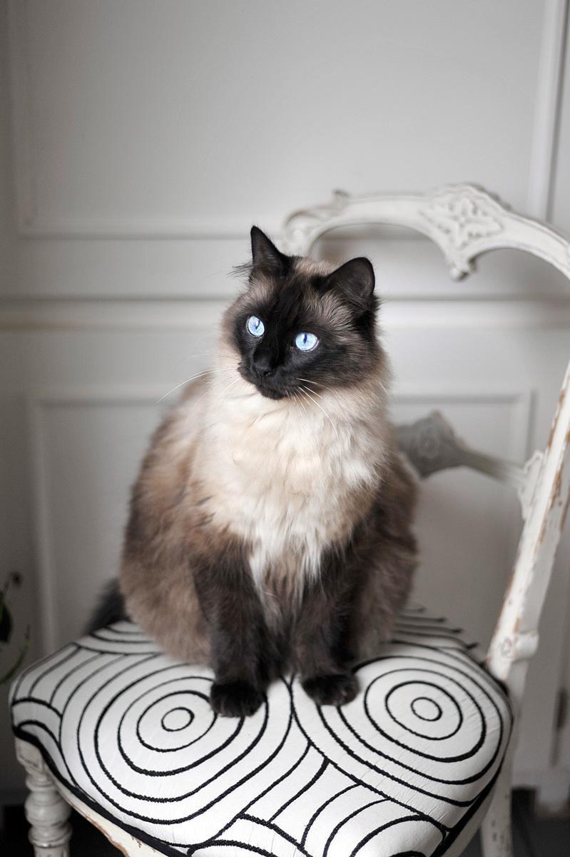 photographe-chiens-chats-animaux-portraits-exterieur-saint-malo-bretagne-207