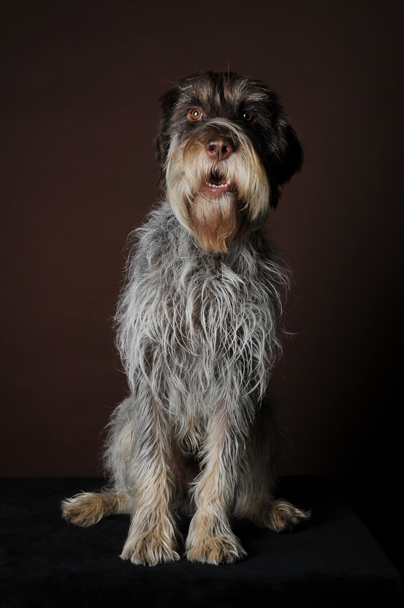 photographe-chiens-chats-animaux-portraits-studio-saint-malo-bretagne-199