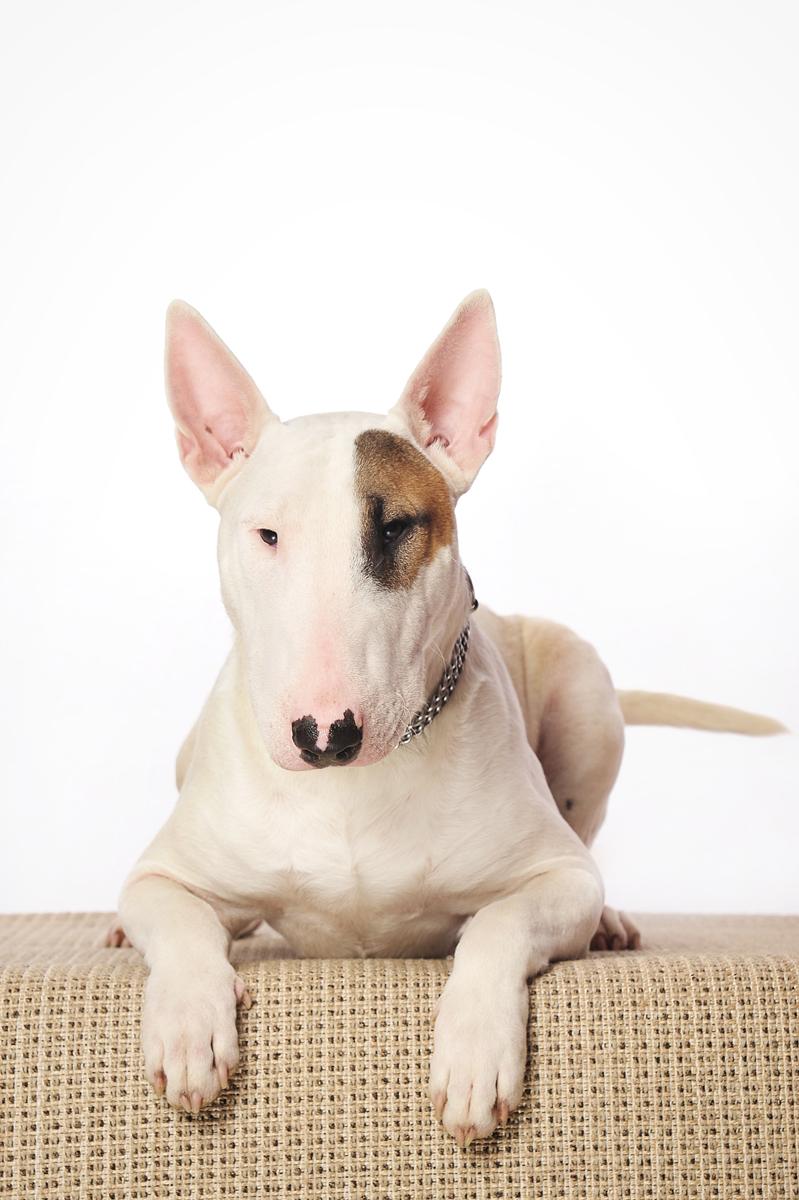 photographe-chiens-chats-animaux-portraits-studio-saint-malo-bretagne-182