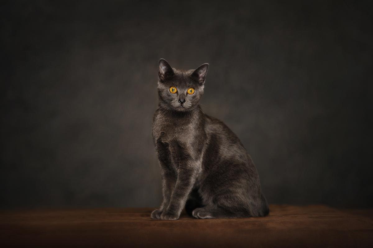 photographe-chiens-chats-animaux-portraits-studio-saint-malo-bretagne-178